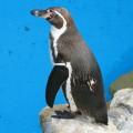 ペンギンアップデート3.0実施後の変動状況(途中データ)